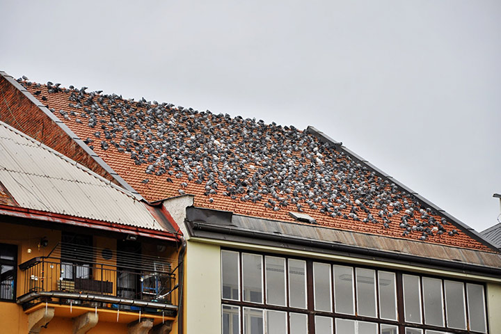 A2B Pest Control are able to install spikes to deter birds from roofs in Thurrock.