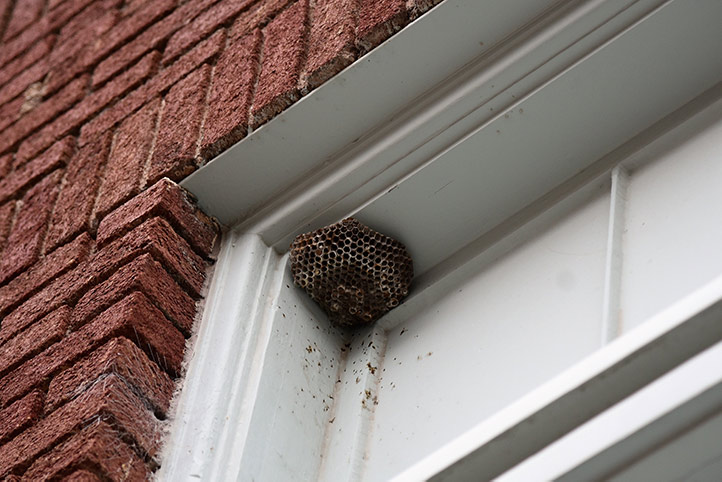 We provide a wasp nest removal service for domestic and commercial properties in Thurrock.
